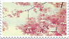 cherry blossoms stamp by sinnamonstamps