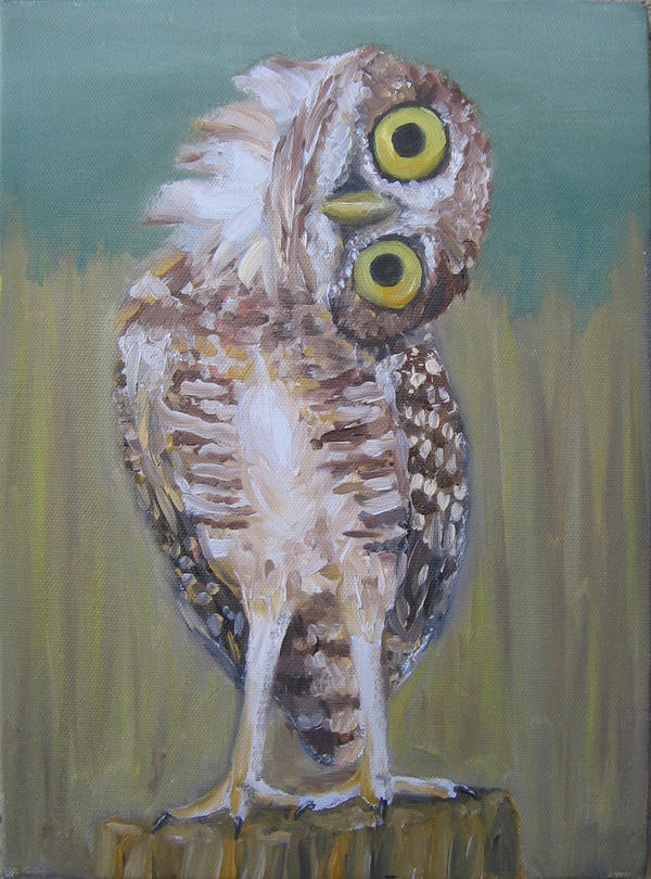 Burrowing Owl: Are you... Demented Animals