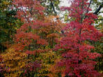 Autumn Begins in Ozarks by LaColombeDeDeuil