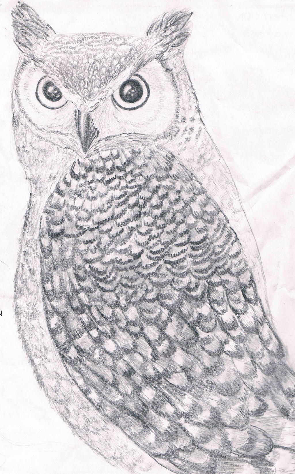 Horned Owl by Guadisaves02