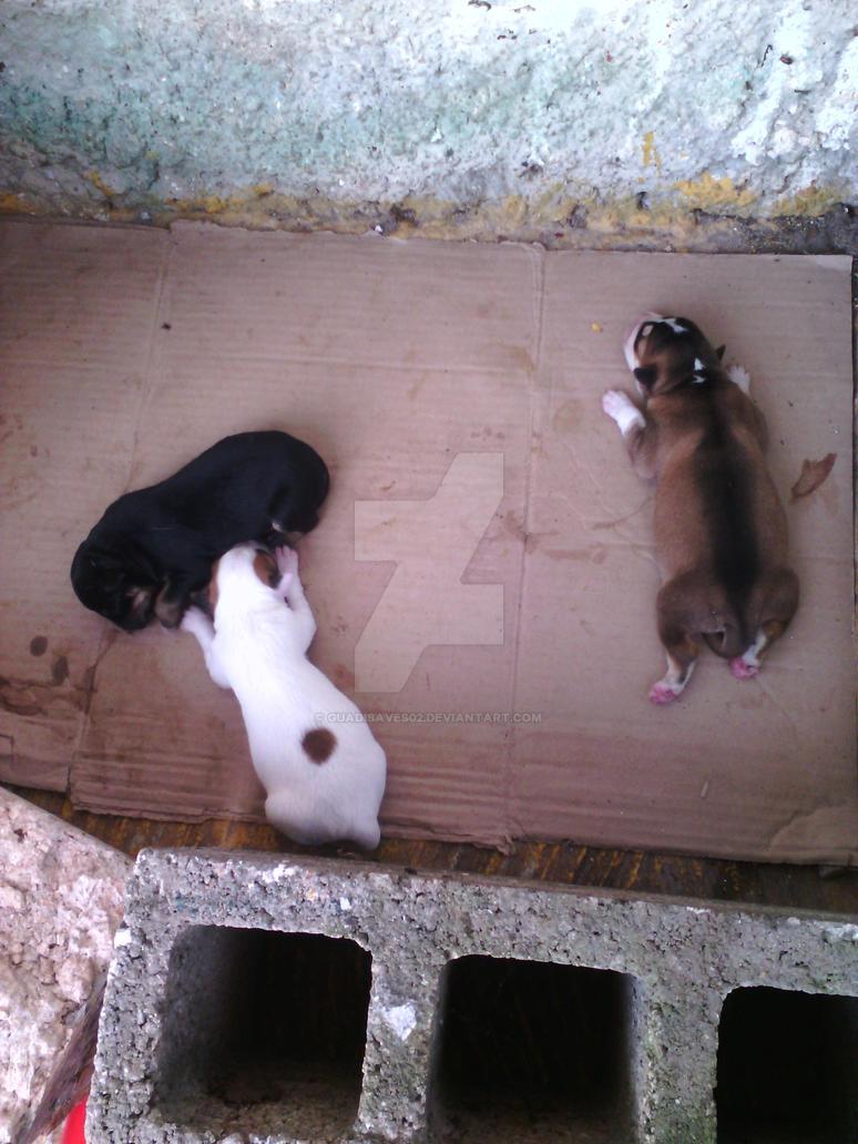 Newborn pups by Guadisaves02