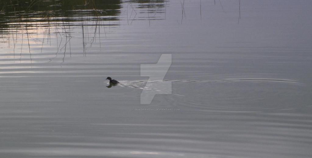Aquatic bird by Guadisaves02