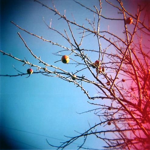 an apple tree by Immortal-Mynx