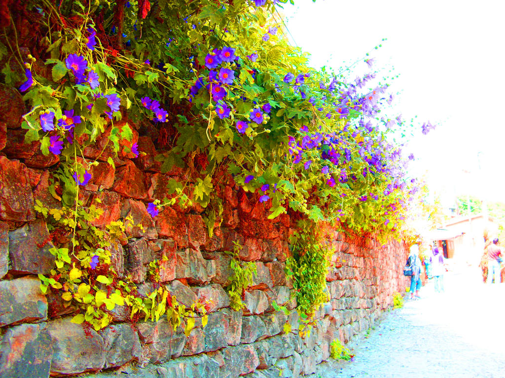 Wall Flowers by Neko--Chana