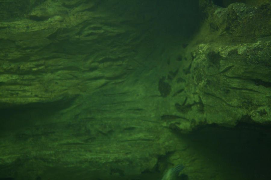 Underwater Textures Life Underwater Texture 1 By