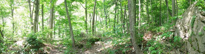 Carolinian Forest Panorama