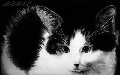 evy's cat by arvieneko