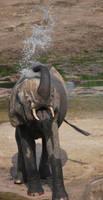 Baby elephant playing by Abenn