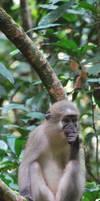 Monkey on a creeper by Abenn