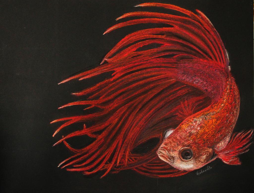 Betta fish (betta splendens) by Anbeads on DeviantArt  Betta Fish Drawings