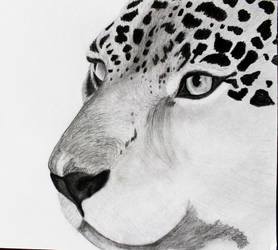 Jaguar WIP (Panthera onca) by Anbeads
