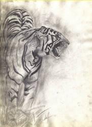 Tigre by alvarosm