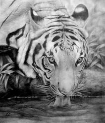 Tiger's eyes by alvarosm