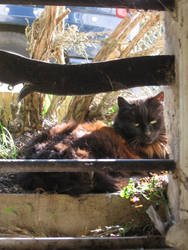 On ne derange pas le Chat. by ByChamallow