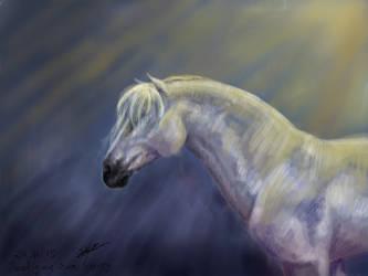 Spanish Stallion - Test by ByChamallow