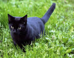 The Black Cat: Summer