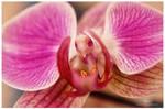 The flower bird