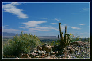 Anza Borrego Desert State Park by shutterbugmom