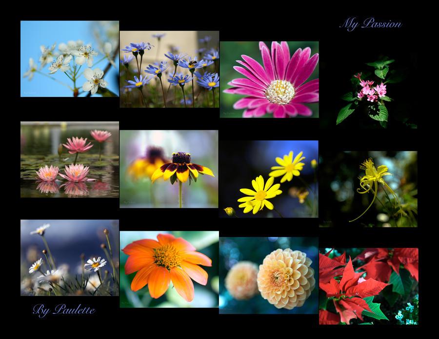 My Passion Calendar by shutterbugmom