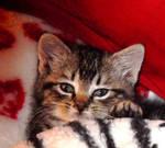 my cute kitten