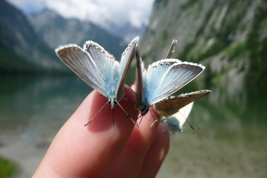 Taming butterflies...