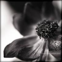no colors to show u... by FioReLLo