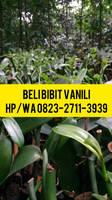 0823-2711-3939 BEST SELLER !! Jual Bibit Vanili Ke