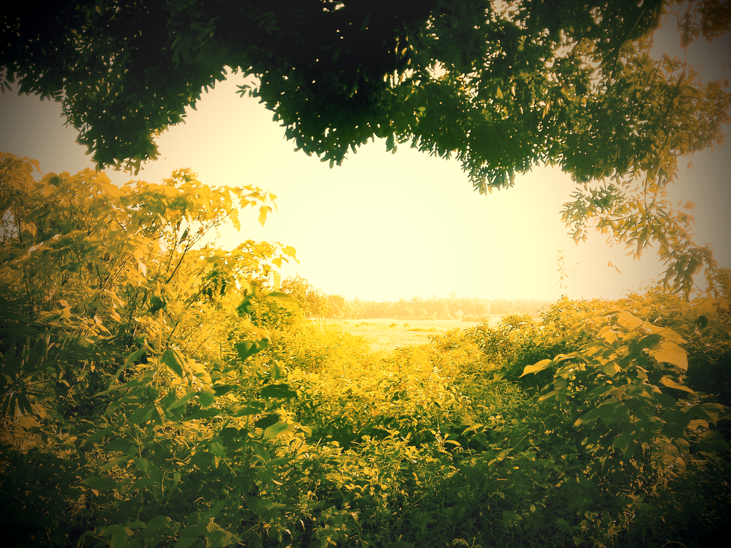 Natural Window by onesliceorange