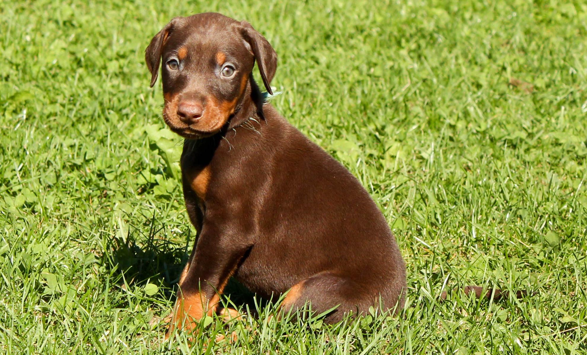 Similar Dogs Like A Patterdale Terrier