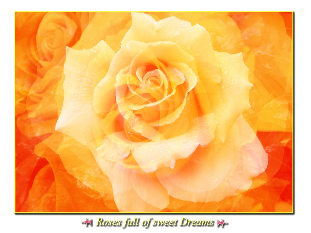 Roses full of sweet dreams