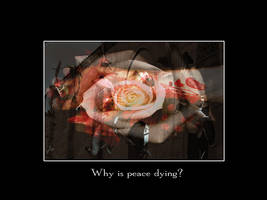 Why is peace dying by badfinger