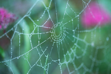 The spider's web by Kassih