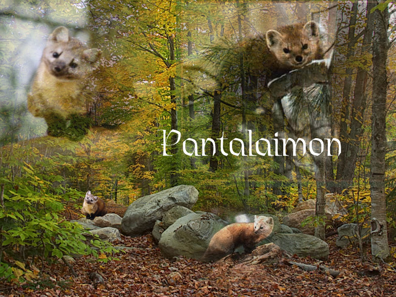 Pantalaimon Wallpaper by Zam522 on DeviantArt