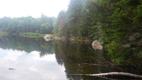 Pond by WeCouldSleepOnStones