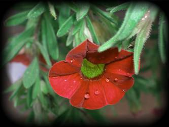 Tears in Heaven by jadedlady