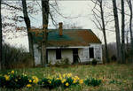 Daffodil House