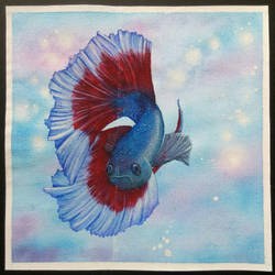 Betta splendens by sagatti