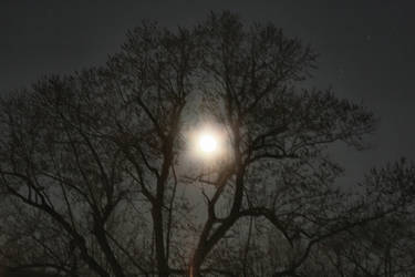 Dec 13 2008 Moon and Tree by Moon-WillowStock
