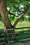 fence tree stock