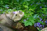 froggie in the garden
