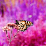 butterfly rainbow stock