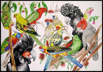 Parrots of Australia by Sasquatch69