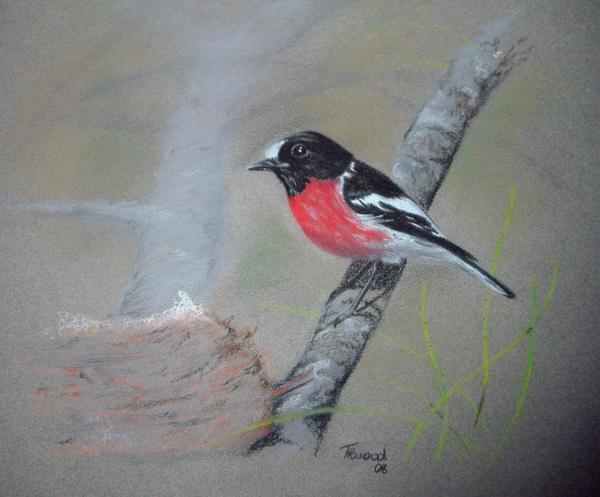 Scarlet Robin by Sasquatch69