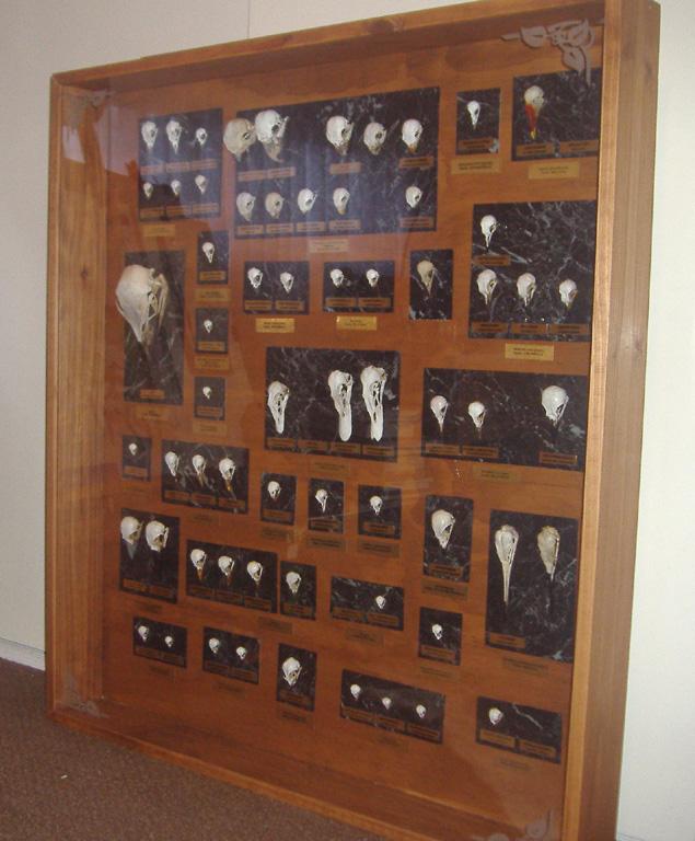 Skull Display Case By Sasquatch69 On DeviantArt