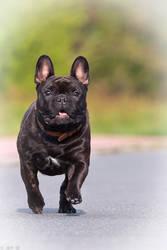 Speeding up the dog by madcury