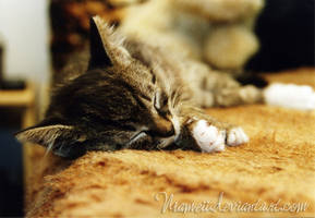 Sleeping Tiger by Niameii