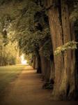 +Tree Path+