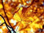 +Golden Brown Autumn+