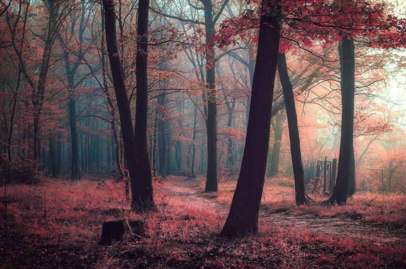 Walk in a dream by KarelSopek
