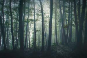 Morning mist by KarelSopek